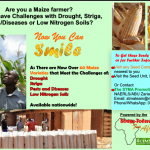 Improved Maize Varieties for Economic Empowerment