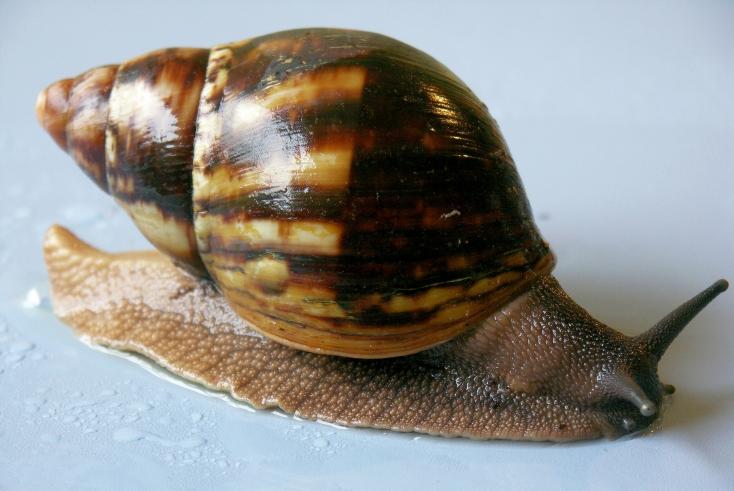 last snail