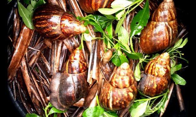 Snail Farming in Nigeria Made Simple!